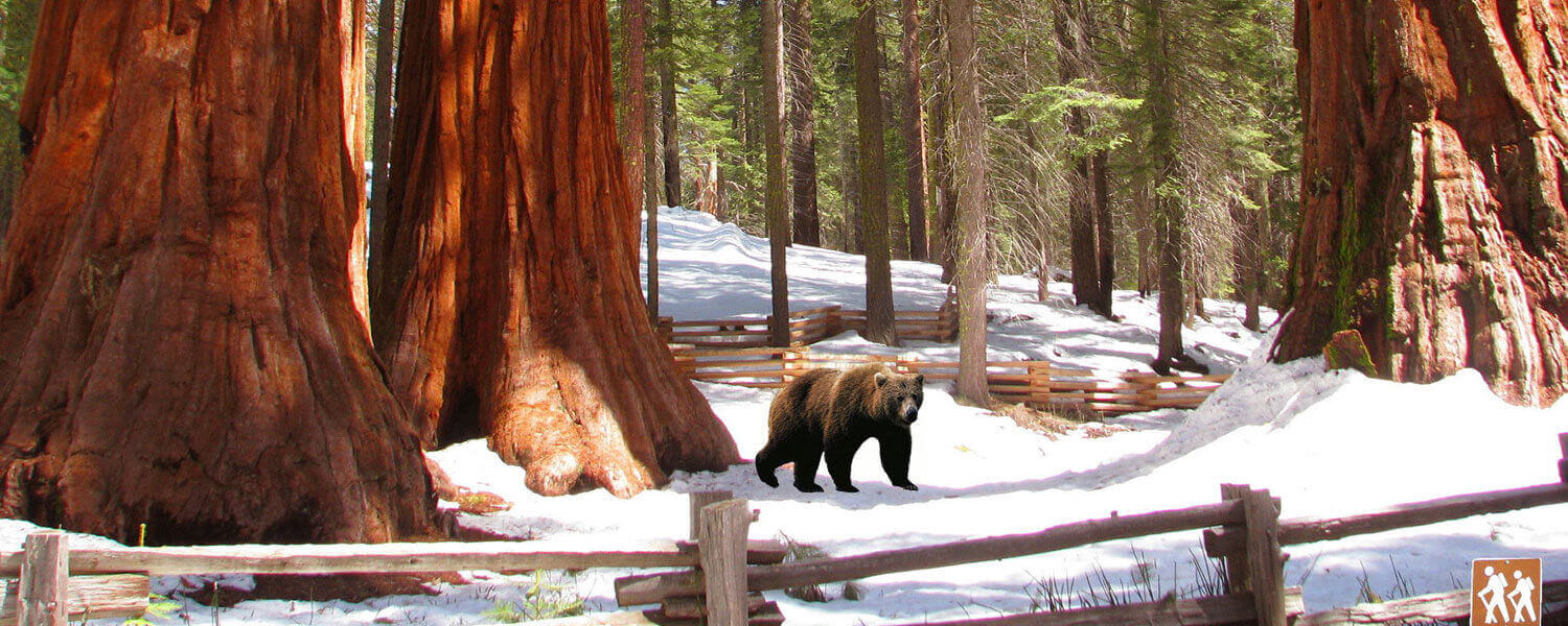 Yosemite-Mariposa-Grove-of-Giant-Sequoias-Winter